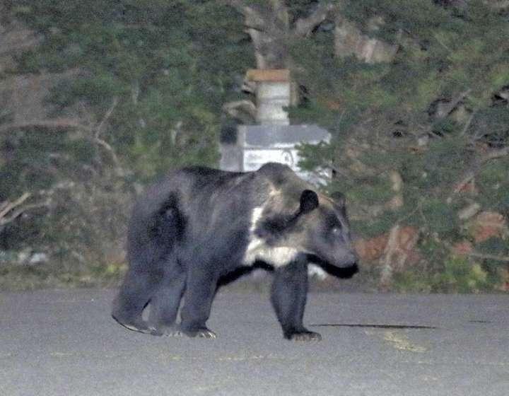 札幌市ヒグマ駆除に賛否両論。207件以上の批判。あなたは家の前にヒグマが出没したらどうする?Twitterでの反応まとめ